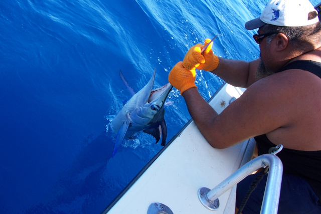 White Marlin fishing South Padre Island