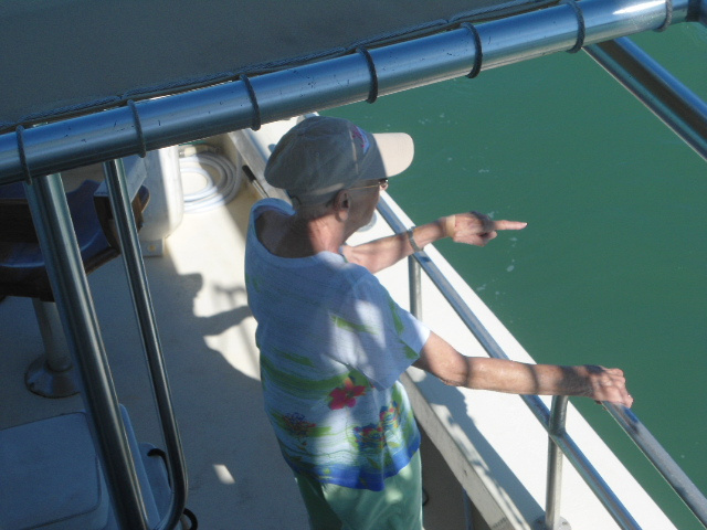 Dolphin Watch South Padre Island Texax