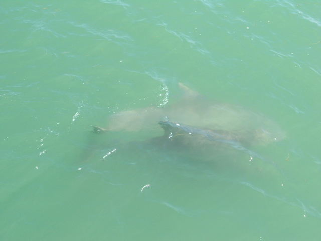 South Padre Island Dolphin Charter